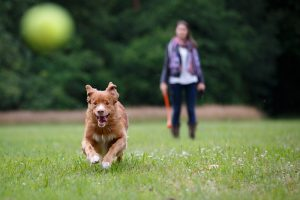 Tips To Keep Your Pet Safe All Summer Long
